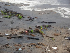 Debris on Costa Rica gulf coast